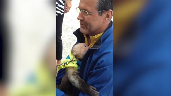 Sirk maymunu bir yıl ayrı kaldığı bakıcısını görünce ağlamaya başladı