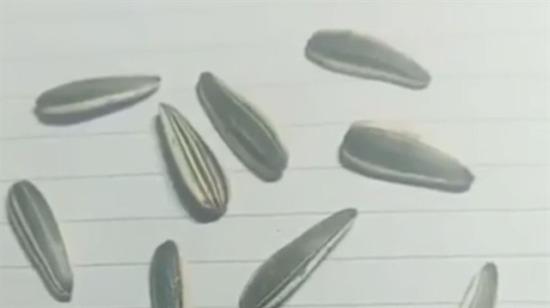 İçlerinden 3 tanesi elle çizilmiş. Hangisi tahmin et?