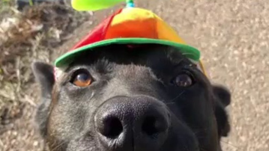 Güzel şapka