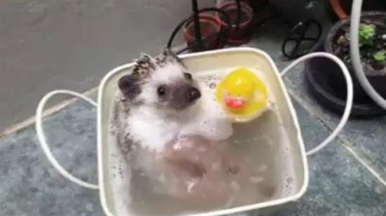 Banyo zamanı
