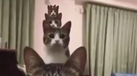 Matruşka kedi