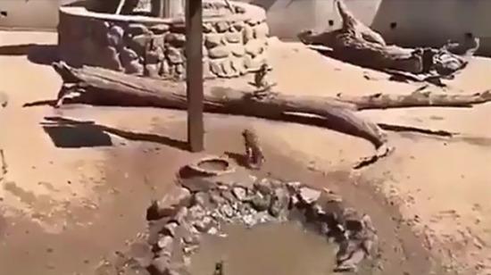 Bi maymun kıskanmadığımız kalmıştı