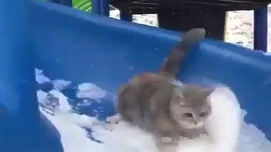 Karın tadını en çok kediler çıkardı