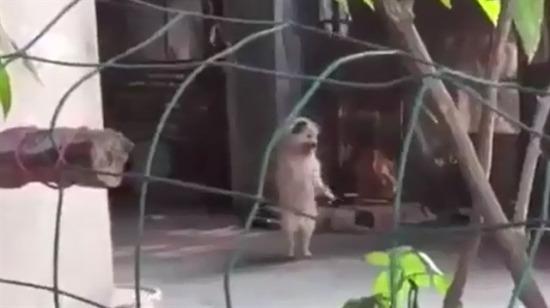 Bu köpekler bizden gizli dans mı ediyor acaba