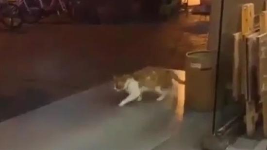 Buga giren kedi