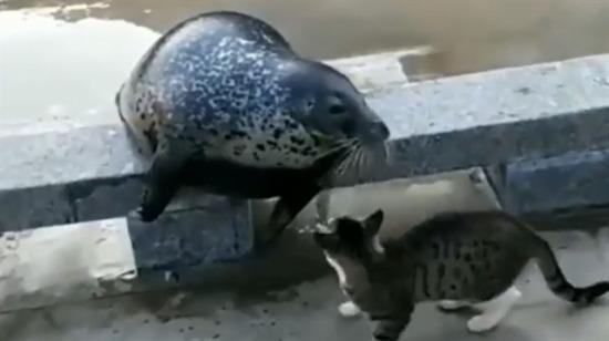 Dayakçı kedi