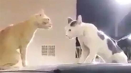 Tamam abi kızma izlemiyorum ben sizi