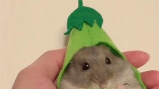Afiyet olsun fare kardeş