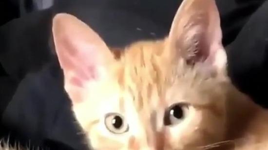 Kedilerin içinde bir insan olduğundan şüpheleniyorum