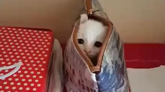 Makyaj çantasına saklanmış minik oyuncu