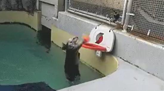 Sportif fok balığı