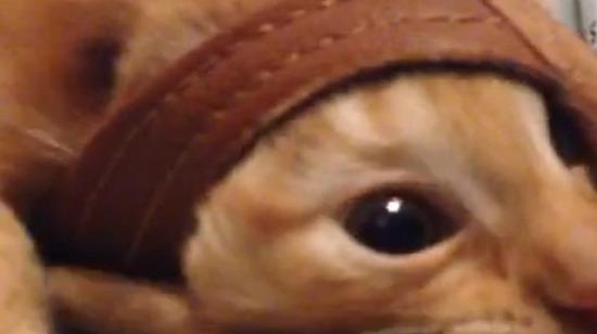 Sarman Kedi Turizm iyi yolculuklar diler