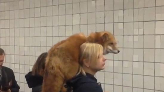 Rusya metrosunda enteresan şeyler oluyor