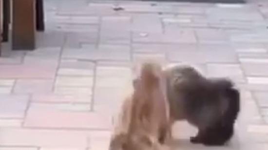 Ninja kedi