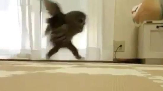 Baykuşların bacak boyu şaşırttı