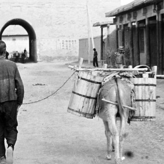 Guizhou Eyaletinin eşeği