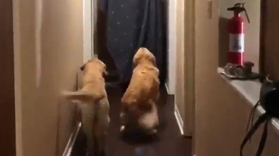 Evin yeni misafiri hiç hoş karşılanmıyor