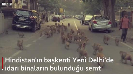 Maymunlar Cehennemi filmi Hindistan'da gerçek olmuş