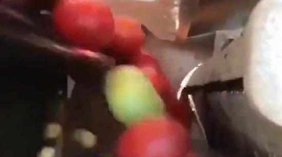 Olmamış domatesleri dışlayan makine