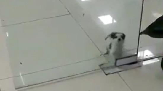 Hayır ben camın içinden geçmek istiyorum!