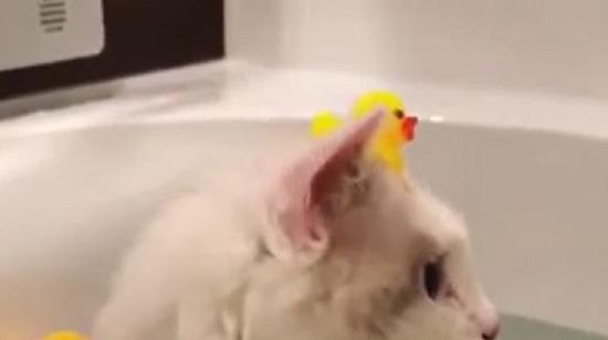 Duş zamanıdır