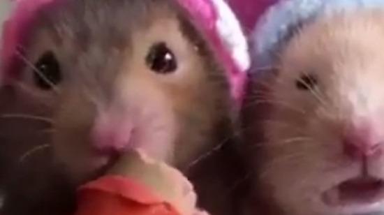 Ağzını şapırdatarak yemek yiyenlerin yanında sağdaki fare gibiyim