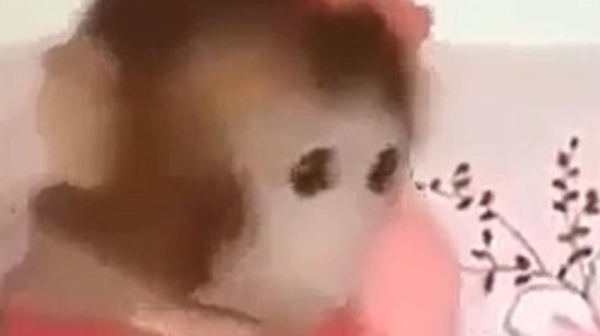Maymun etmek tam olarak bu oluyor