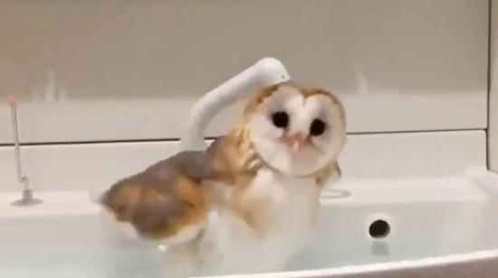 Gelemem canım süt banyosu yapıyorum