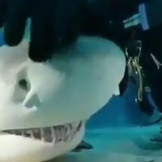 Yavru köpek balığı kendini sevdiriyor