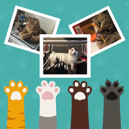 Dünyanın kendisine hizmet ettiğine inanan kedilerin 13 hali