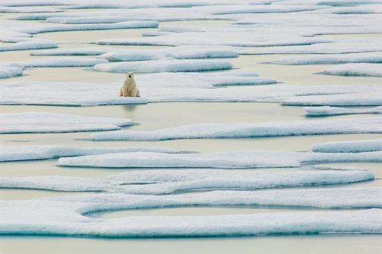 Kutuplarda yalnızlık