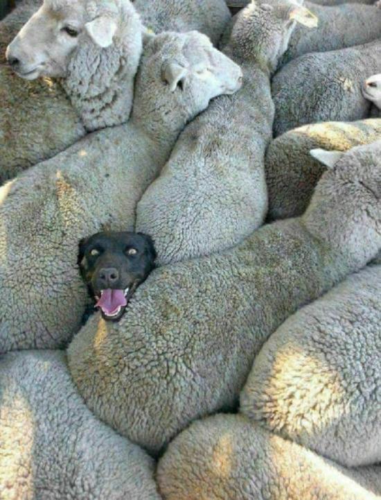 Bu köpek çok mutlu