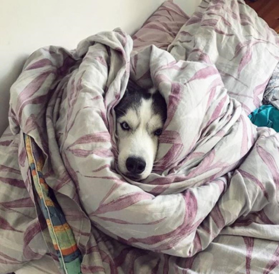 Beni yalnız bırak, uyumak istiyorum!