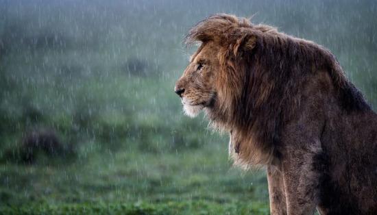 Yağan yağmur değil dertlerim