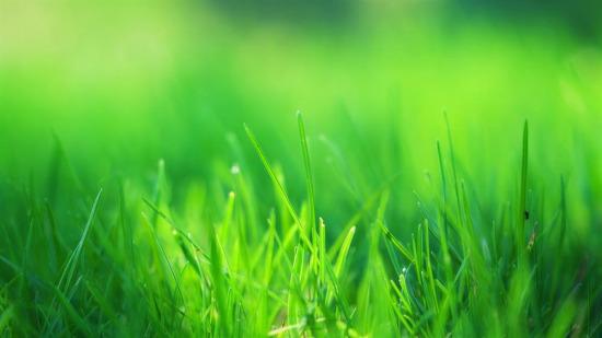 Yeşil sevenlere...