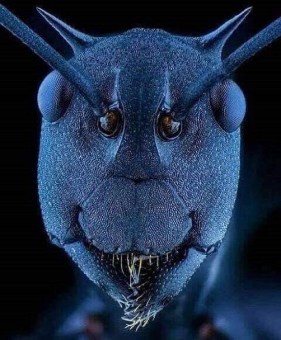 Elektronik mikroskop altında karıncanın yüzü