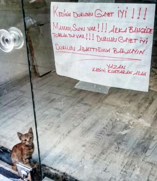 Durumu abartma kedi