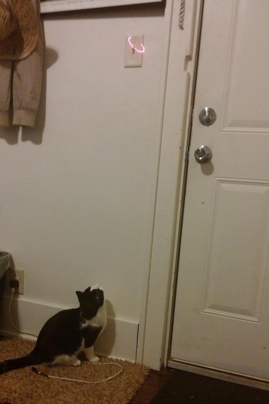 Lazerle kediye ışığı kapattırmak