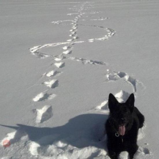 Karda makas atmış