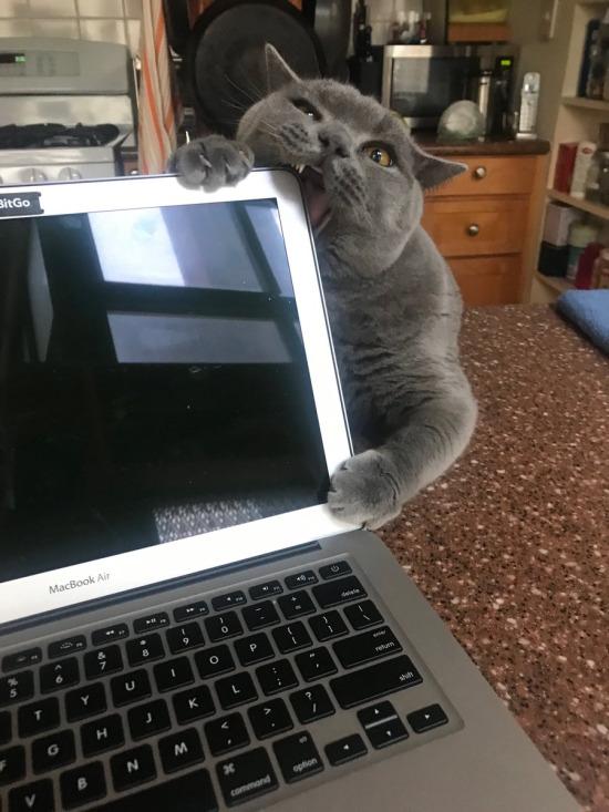 Benimle ilgilenmezsen bilgisayarını yerim