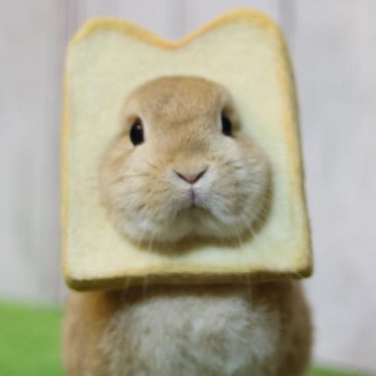 Ekmek arası