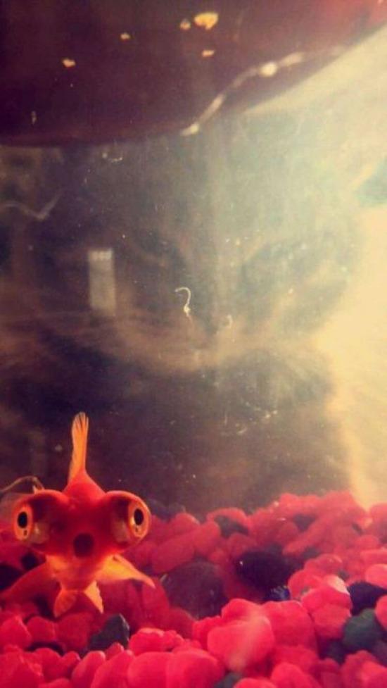 Korkma balık kardeş o yüzme bilmiyor