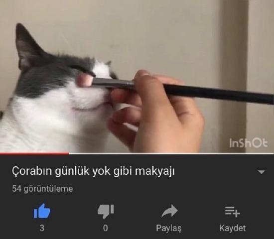 CatTube