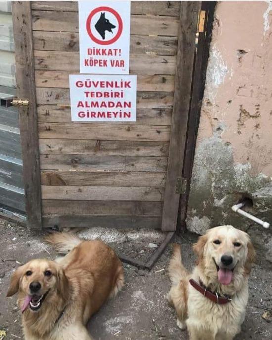 Köpekler: Siz onlara bakmayın buyrun geçin