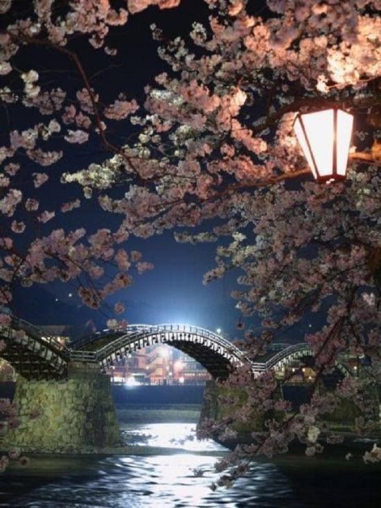 Kintai Köprüsü, Iwakuni, Yamaguchi, Japonya