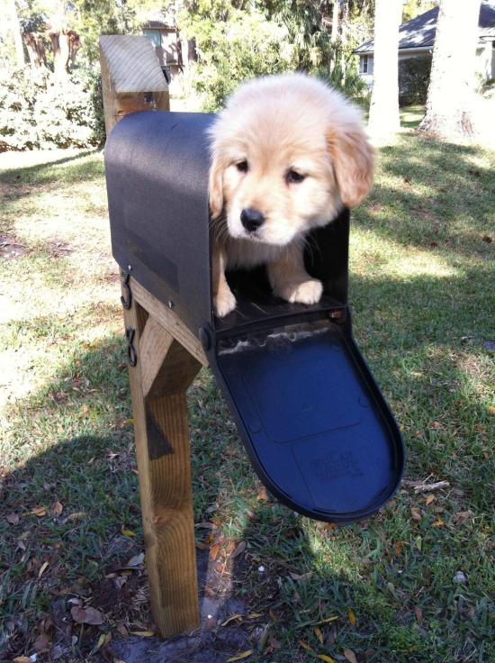 Böyle bir posta gelse mutlu olabilirim