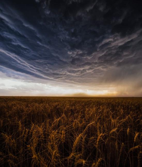 Texas ve çevresindeki buğday alanları üzerinde büyük bir toz fırtınası