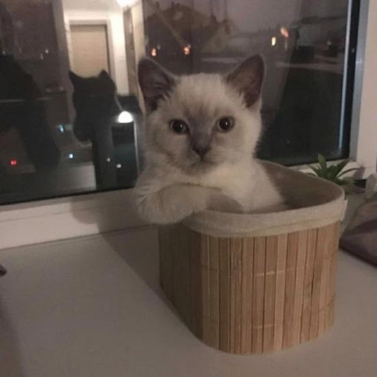 Ne demek eve başka kedi alacağım?