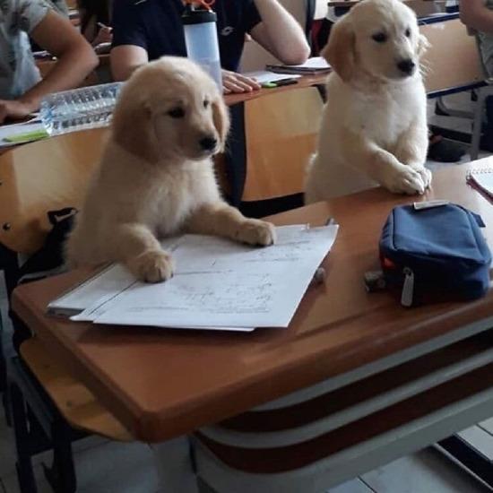 Demek köpekler böyle eğitiliyor...