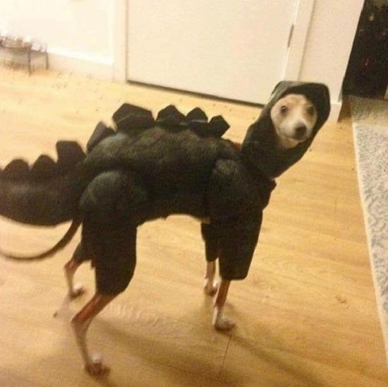 Biri dinozorların nesli tükendi mi dedi?
